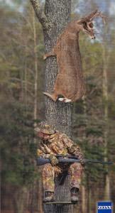 Rychlost jelena rychlost